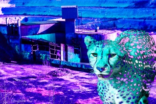 Cheetah i brottet