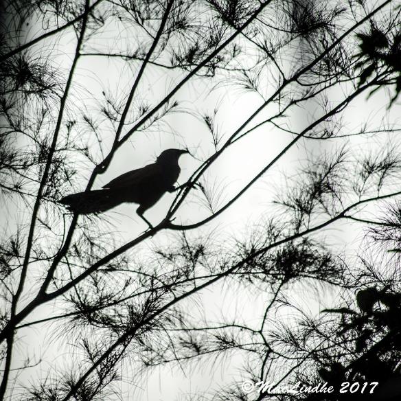 fågelsiluett