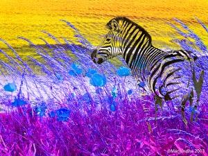 Zebra i Höllviken