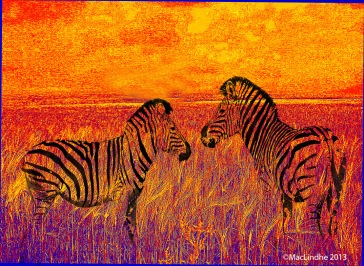 zebror orange web