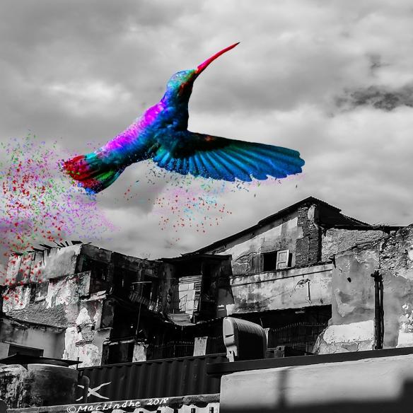 kolibrisvans3